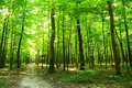 Green Forest Stock Images - 6368804