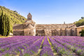 Lavender Fields At Senanque Monastery, Provence, France Stock Photo - 63612390