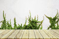 Green Leaves Wall And Old Wood Floor For Background Royalty Free Stock Images - 63627409