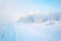 Fog In Winter Royalty Free Stock Image - 63672716