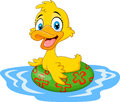 Cartoon Funny Duck Floating With Inflatable Ring Royalty Free Stock Image - 63679496