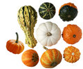 Gourds Royalty Free Stock Photos - 6374288