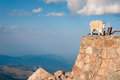 Mountain Goat Stand Proudly, High In The Rocky Mountains Stock Image - 63798941