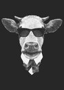 Portrait Of Cow In Suit. Royalty Free Stock Images - 63952269