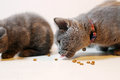 Cute Kittens Hungry Royalty Free Stock Photos - 63958868