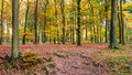 The Forest Of National Park The Hoge Veluwe In The Netherlands Stock Photography - 63960662