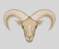 Drawn Muzzle Of Ram With Big Horns Stock Photography - 63990752