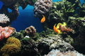 Colorful Fishes Stock Images - 645784