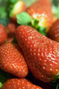 Strawberries Royalty Free Stock Photos - 649008