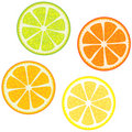 Slices Of Citrus Fruits Royalty Free Stock Photo - 6403495