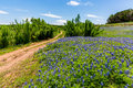 Old Texas Dirt Road In Field Of  Texas Bluebonnet Wildflowers Stock Photo - 64010900