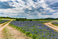 Old Texas Dirt Road In Field Of  Texas Bluebonnet Wildflowers Royalty Free Stock Photo - 64011045