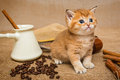 Little Kitten  And  Coffee Royalty Free Stock Image - 64024966
