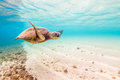 Hawaiian Green Sea Turtle Royalty Free Stock Photo - 64093775