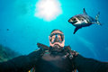 Underwater Selfie With White Shark Ready To Attack Royalty Free Stock Images - 64118939