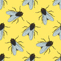 Seamless Pattern With Fly. Musca Domestica . Hand-drawn . Fly. Vector Stock Photos - 64134133