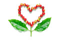 Red Coffee Beans  Berries In Heart Shape With Coffee Leaf. Stock Image - 64150791