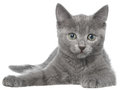 Small Gray Kitten Lay Isolated Stock Photo - 64168230