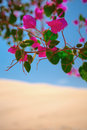 Flowers Blossomed In An Oasis In The Desert Stock Photography - 64183122