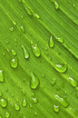 Green Leaf Background With Raindrops Royalty Free Stock Images - 6424289