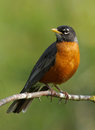Robin Stock Photography - 64224772