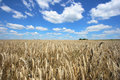 Harvest Time Royalty Free Stock Photo - 6437065