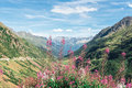 Swiss Apls With Wild Pink Flowers Stock Photos - 64305673