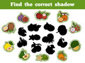 Find The Correct Shadow (fruits) Stock Photos - 64330213