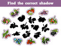 Find The Correct Shadow (berry And Fruits) Royalty Free Stock Photos - 64330218