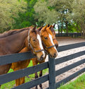 Three Equine Yearlings In A Corral Stock Images - 64356984