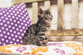 Adorable Baby Grey Tabby Kitten On A Garden Bench Royalty Free Stock Photography - 64380627