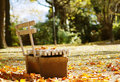 Sunny Fall Day In The Park Royalty Free Stock Photos - 6444608