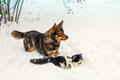 Dog And Cat Playing In Snow Stock Photo - 64407680