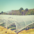 Greenhouse Stock Images - 64465264