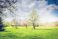 Spring Park Or Garden With Blooming Fruit Trees, Green Lawn And Sky. Royalty Free Stock Photography - 64477257