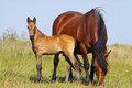 Mare And Foal Stock Photos - 64495163
