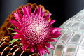 Flower, Pinecones And Textured Glass Vase Royalty Free Stock Photography - 6456157