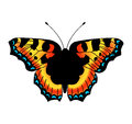 Vector Butterfly. Stock Images - 64521054