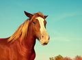 Portrait Of Brown Horse Royalty Free Stock Photos - 64522318
