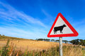 Waring Sign For Cow In  The Country Side In Aberdeen Royalty Free Stock Image - 64550986