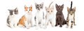Row Of Cute Kittens Together Stock Image - 64598631