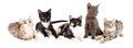 Row Of Five Cute Kittens Together Stock Image - 64598731