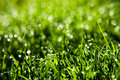 Grass With Dew Drops Stock Photos - 6465273