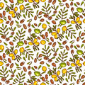 Seamless Pattern Argan Oil Stock Photography - 64606882