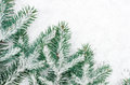 Spruce Twig Covered With Snow Royalty Free Stock Photos - 64624408