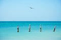 Higgs Beach Pier, Bird, Seagull, Cormorant, Wooden Stakes, Sea, Key West, Keys Royalty Free Stock Photo - 64634455