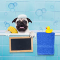 Dog In Shower Royalty Free Stock Images - 64709429