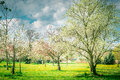 Blossom Of  Fruits Trees Garden Or Park. Spring Nature Stock Photo - 64715630
