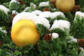 Big Yellow Ball With Snow On Christmas Tree Royalty Free Stock Image - 64720086