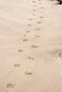 Sandy Footprints Royalty Free Stock Image - 64725456